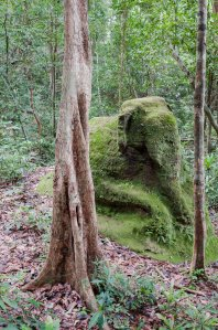 Scene at an unexcavated city in Cambodia. Source: Terence Carter/The Guardian